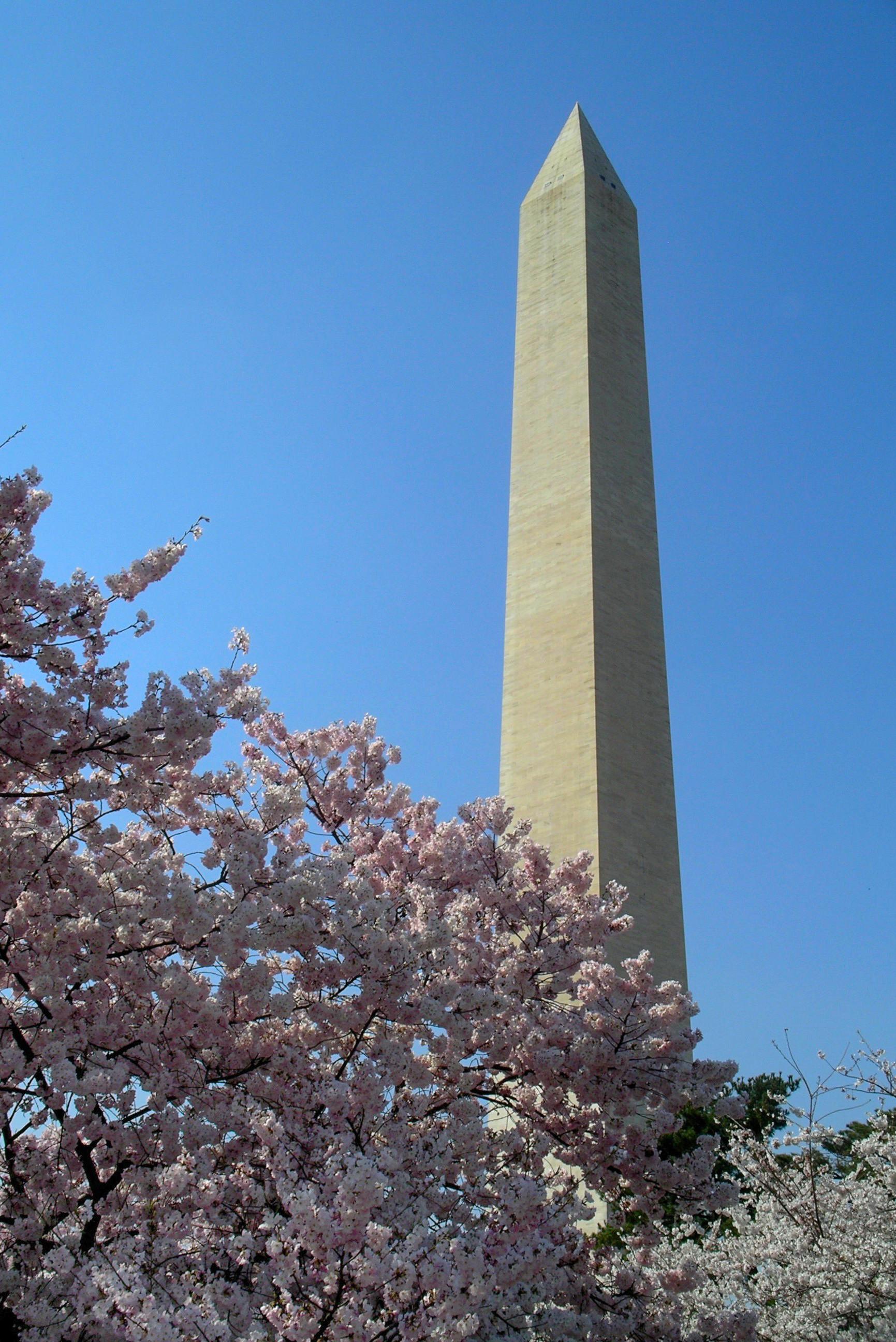 Blossomy Washington