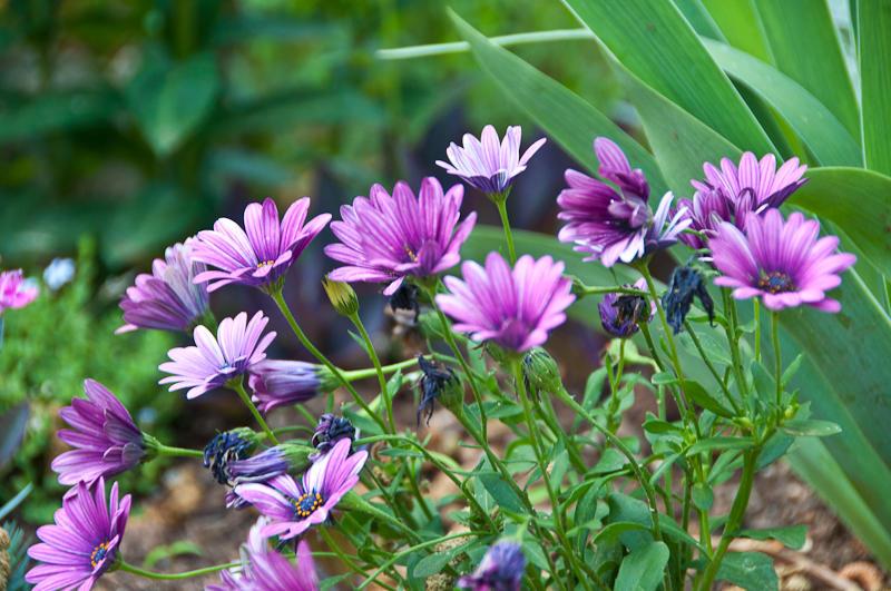 cher_austin_garden-004.jpg