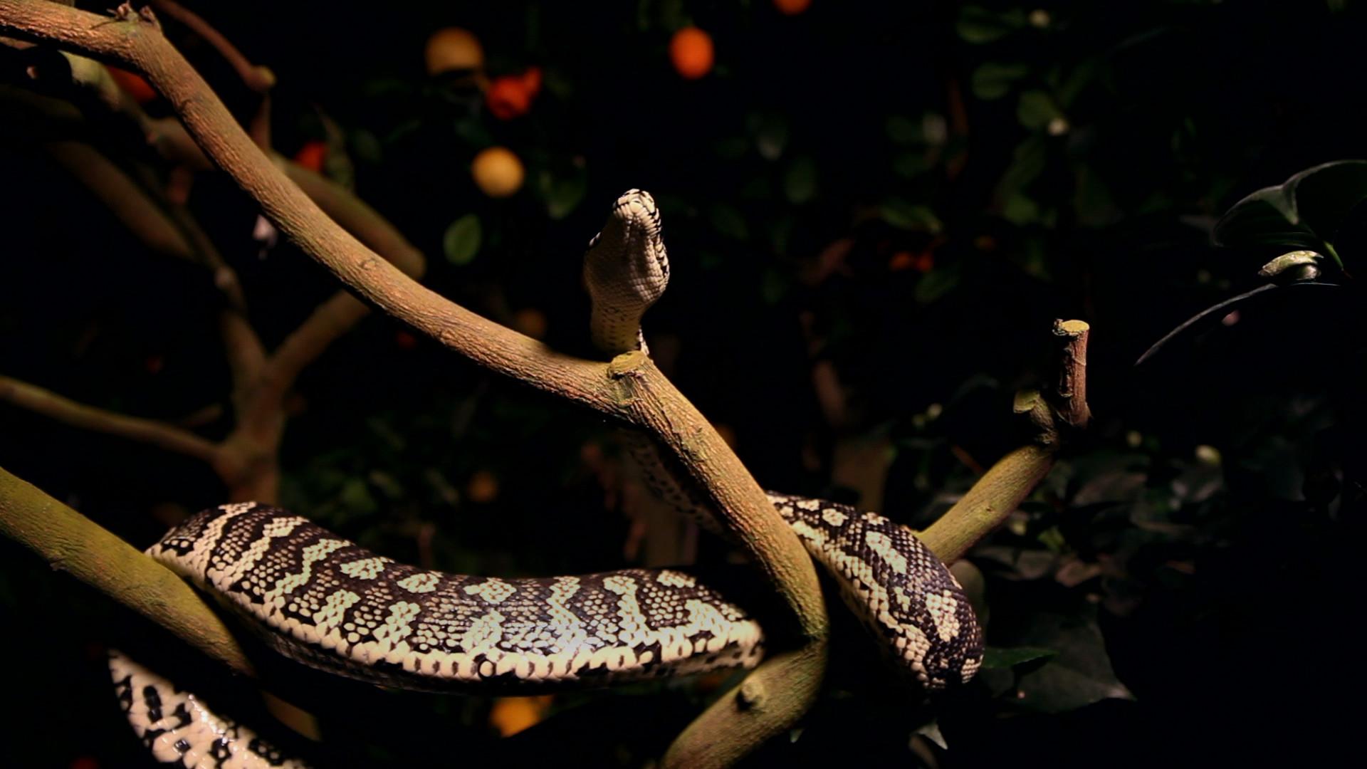 Snake 2.jpg