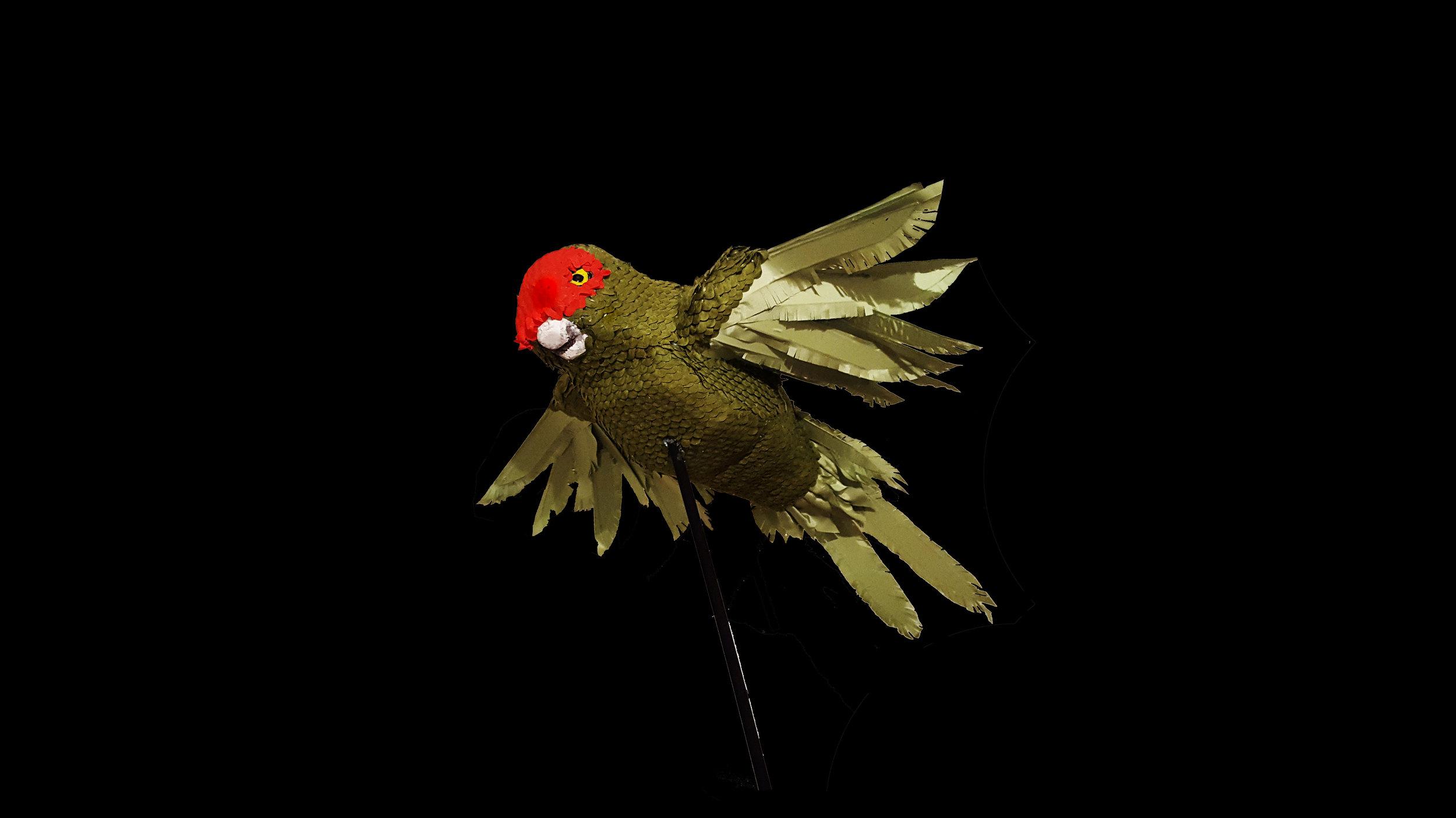 flyingparrotforwebsite.jpg