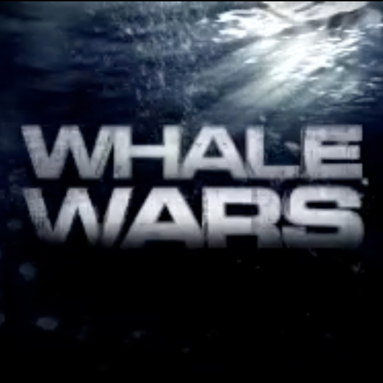 Whale Wars Our Work