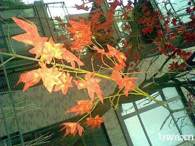 Autumn Extension