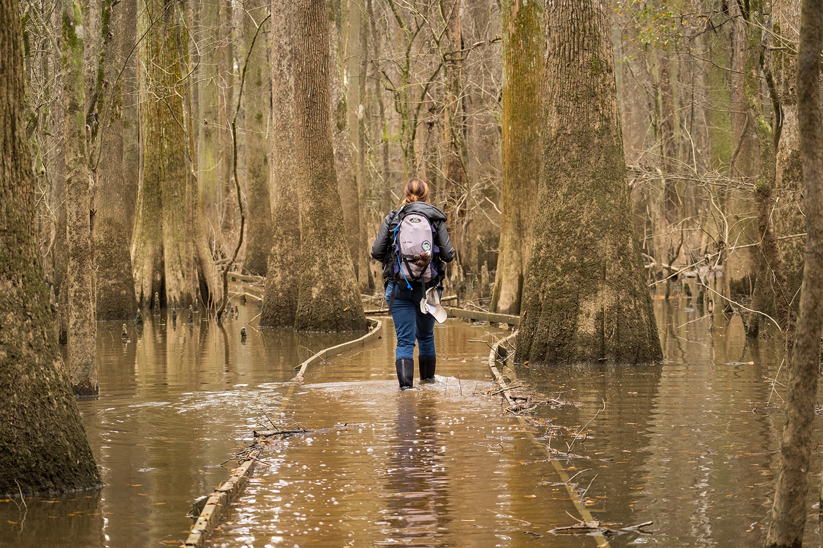 Stomping through a flooded forest of naked cypress trees in Congaree National Park in South Carolina