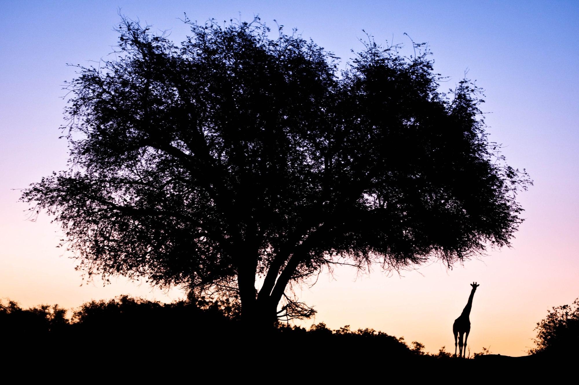 Palmwag Concession, Namibia