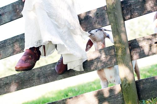springton-manor-farm-goats-eat-wedding-dress.jpg