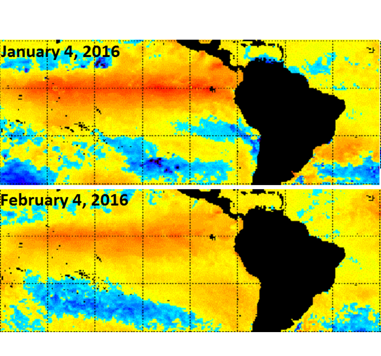 Change in sea surface temperature anomalies in the last month; courtesy NOAA