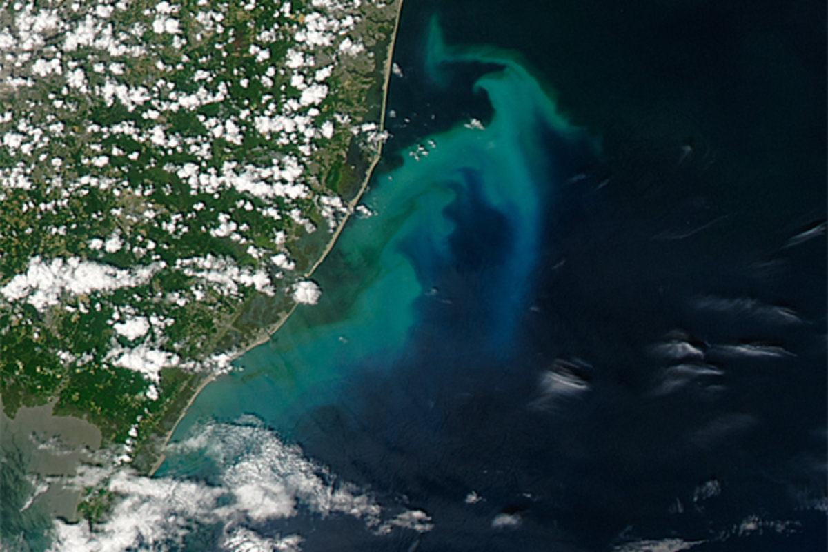 Phytoplankton off the coast of New Jersey from a NASA satellite photo taken July 7, 2016. The blooms are fueled by upwelling, which occurs when winds blow surface waters away; image courtesy NASA