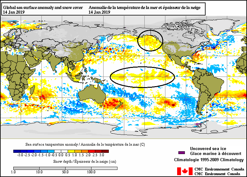 """Current sea surface temperature anomalies with a """"Modoki"""" type of El Nino in the central Pacific (circled area) and a large area of the northeastern Pacific (circled area) that is warmer-than-normal. Map courtesy CMC Environment Canada"""