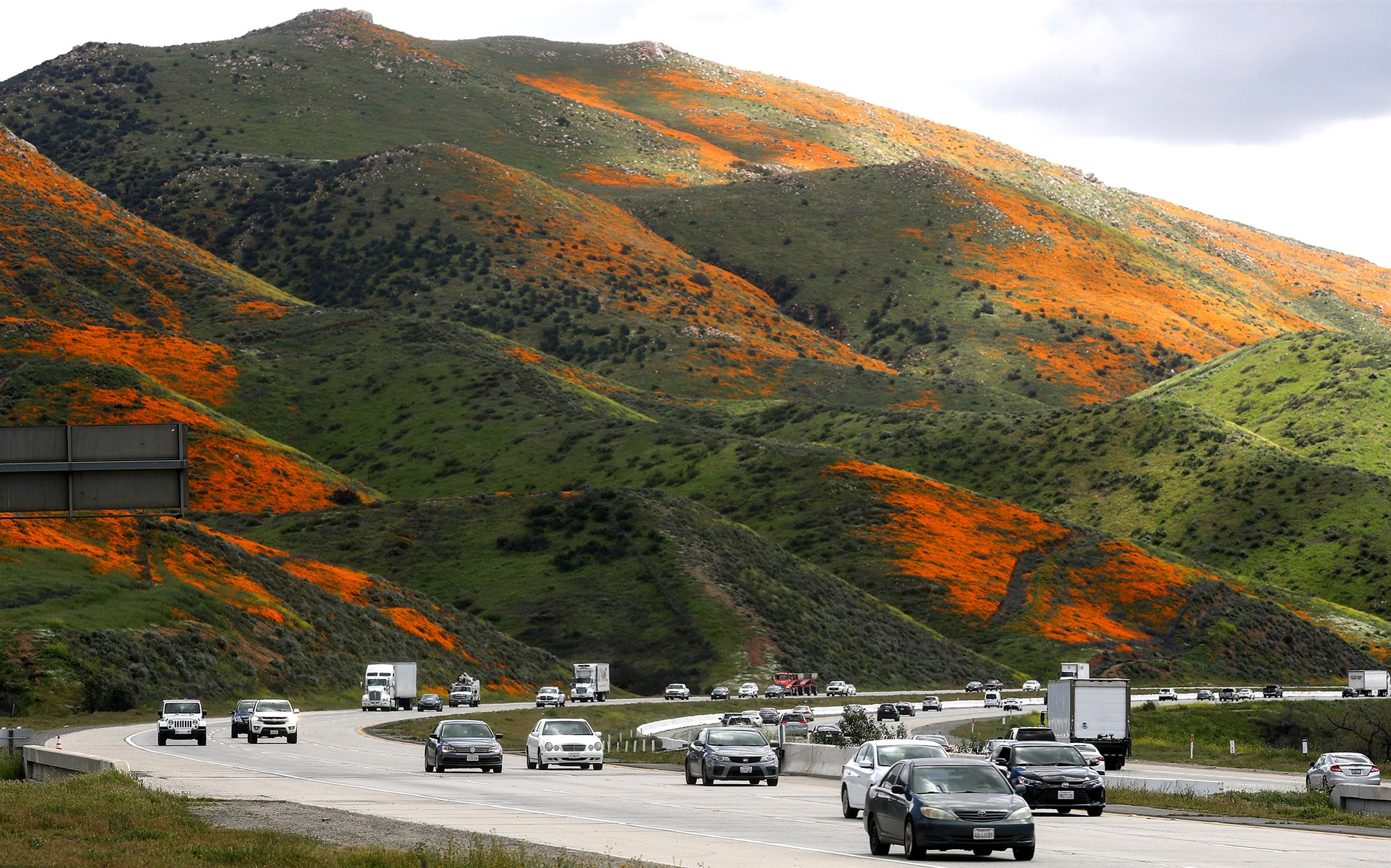 Heavier than normal winter rains have produced super blooms of wildflowers in California. Courtesy Mario Tama / Getty Images
