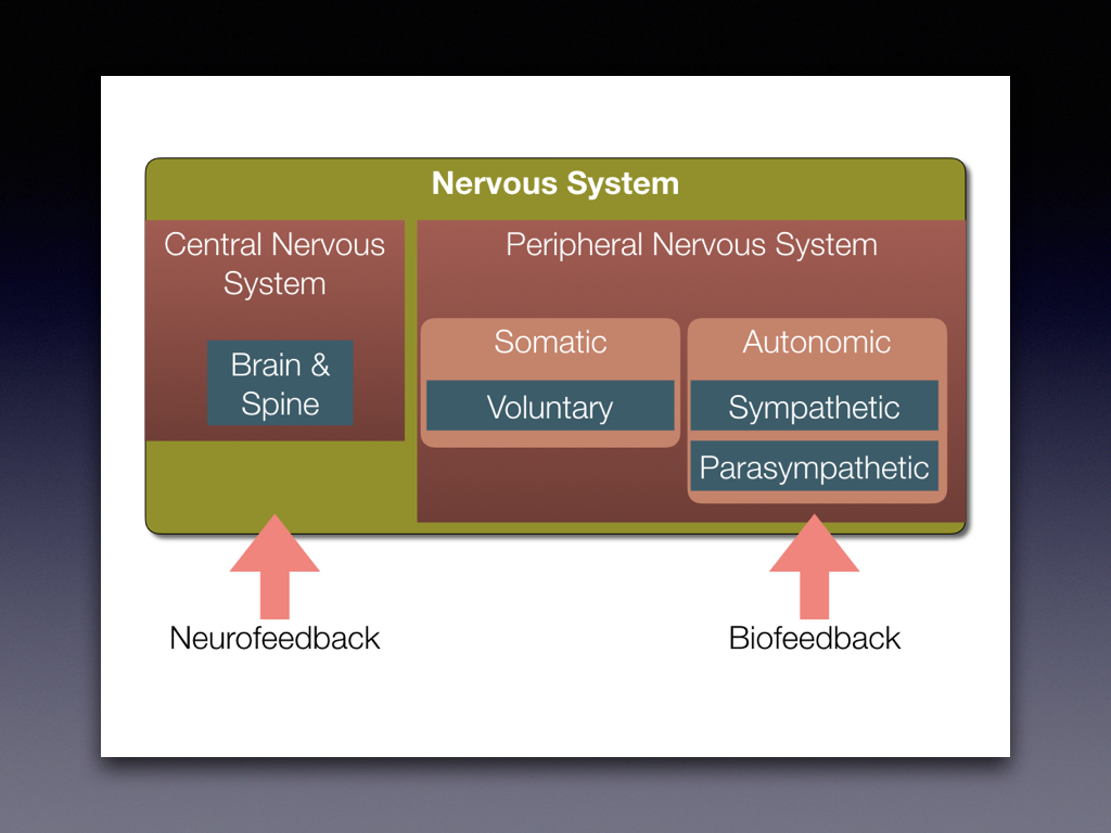 We believe in combining Biofeedback sensors that reflect the status of the Peripheral Nervous System along with Neurofeedack