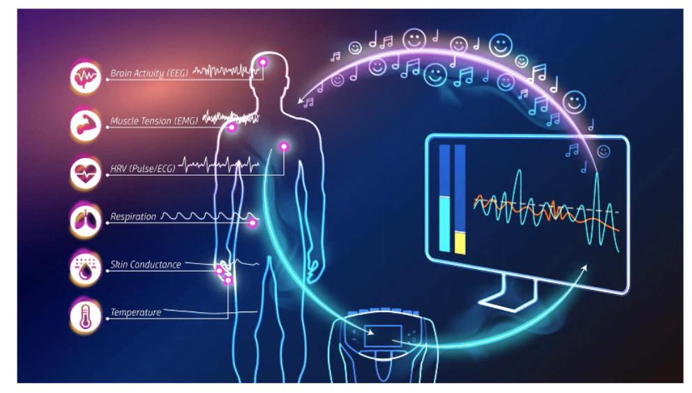 The neurophysiological feedback loop