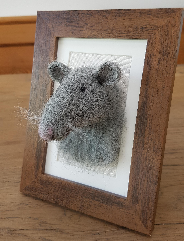 Rattie Fluffyhead.jpg