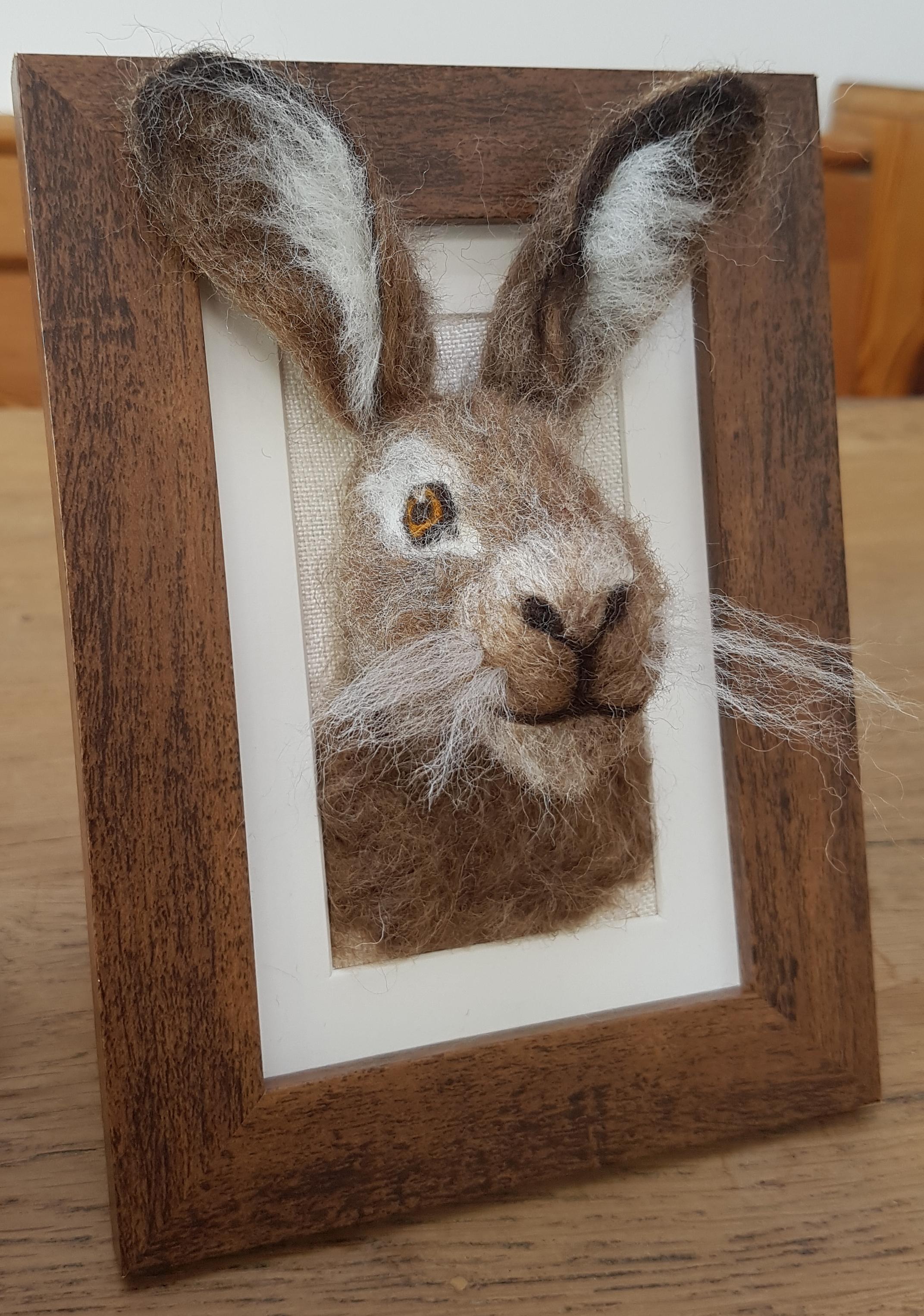 Brown Hare fluffyhead 1.jpg