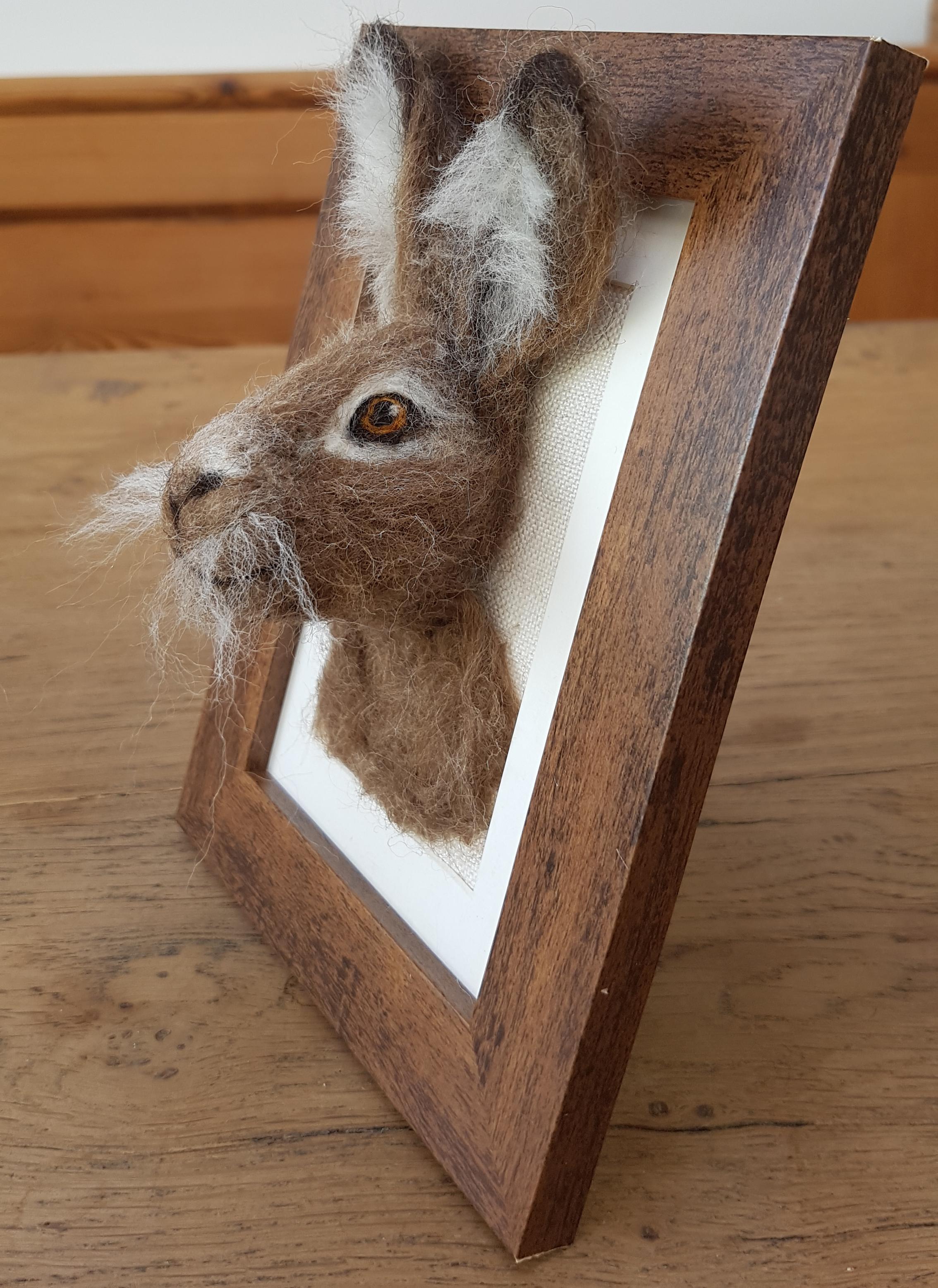 Brown hare Fluffyhead 3.jpg