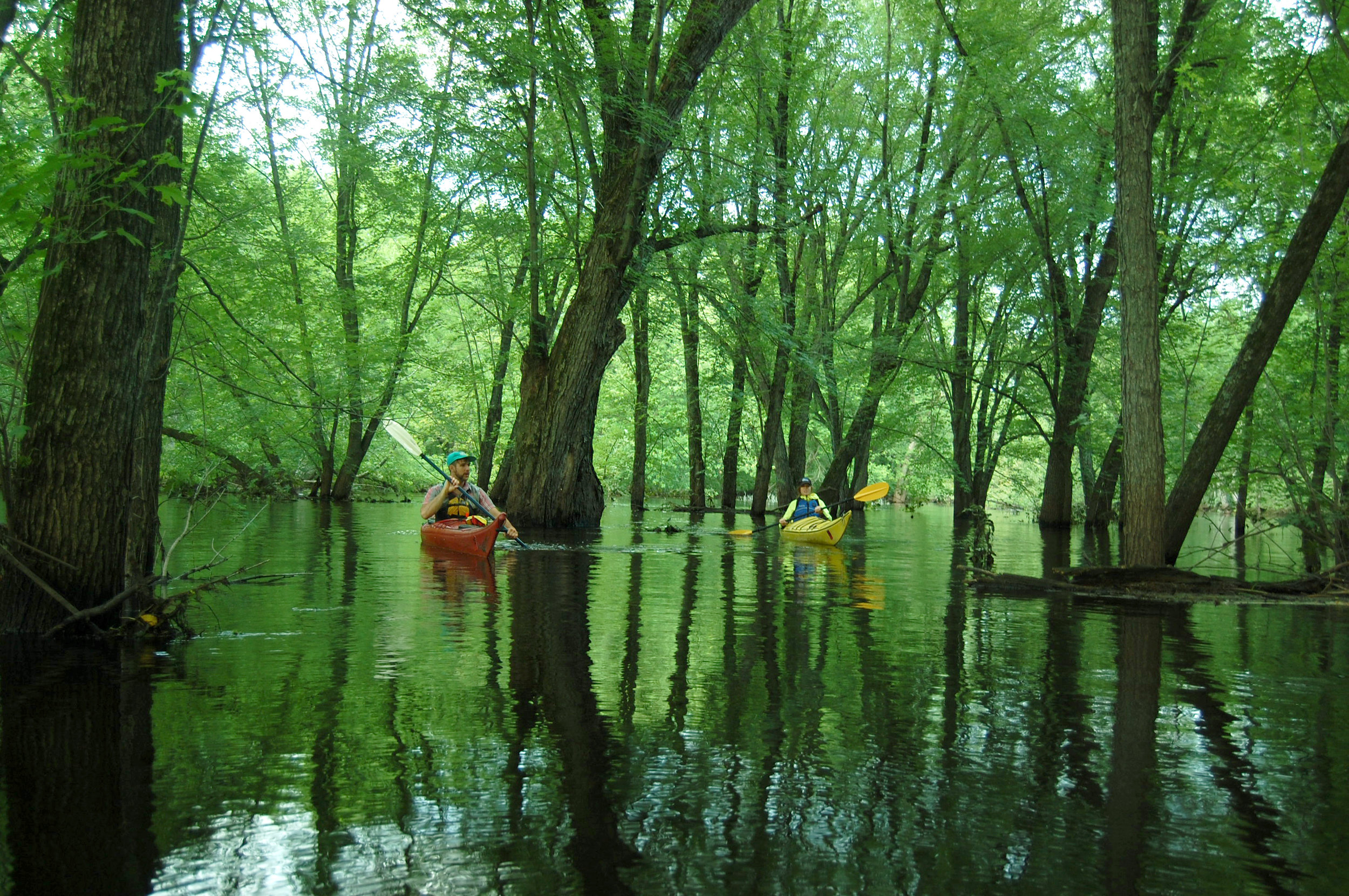 Flooded Forest Tour - 10am, 3:30pm$90/adult, $75/child