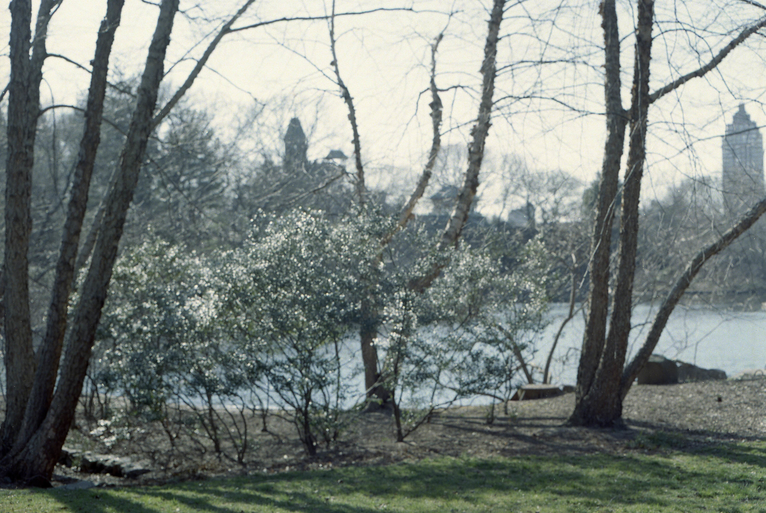 Central Park  2013  c-type print framed 62 x 84.6 cm