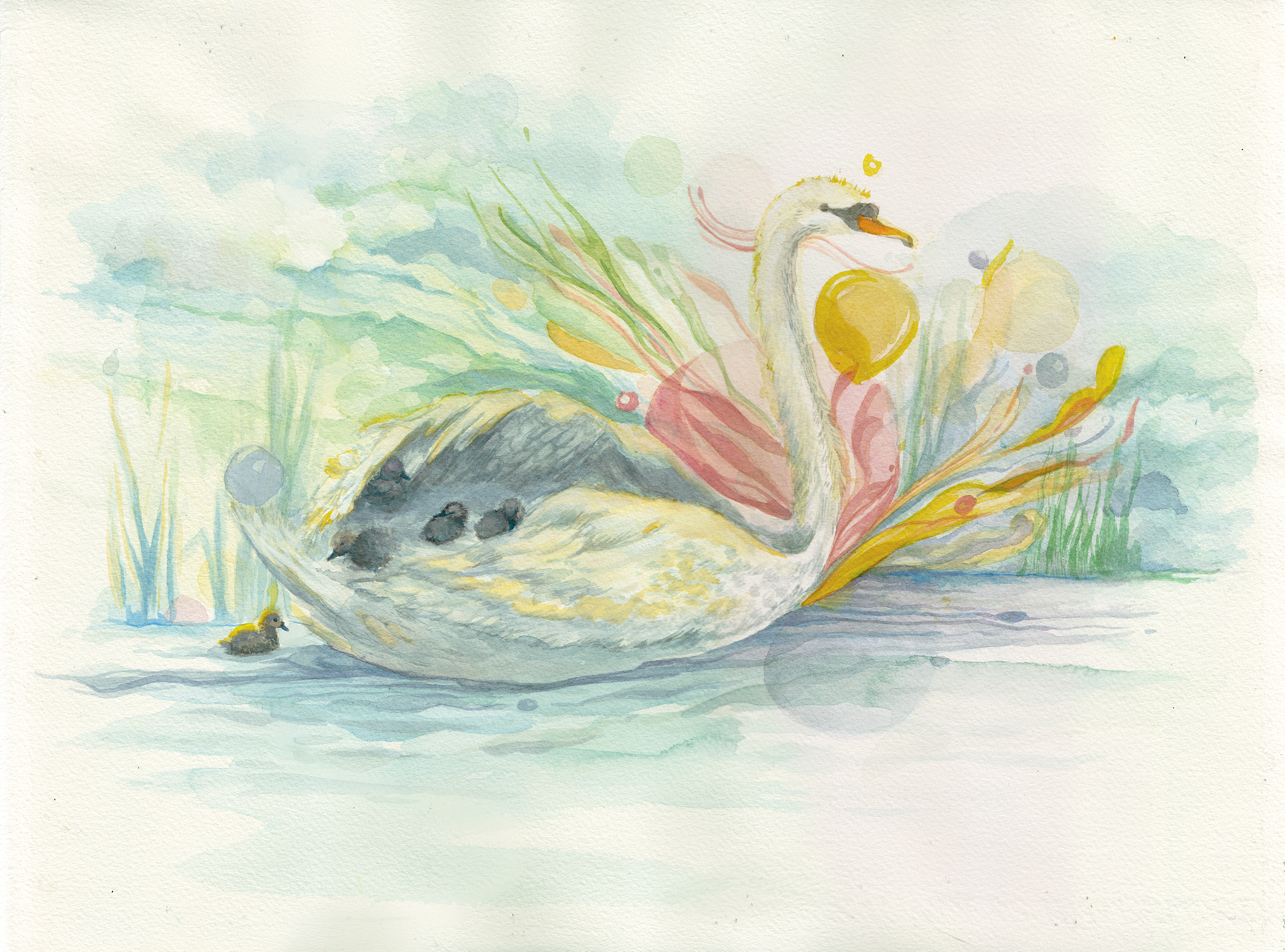 Swan and Cygnets, 2013