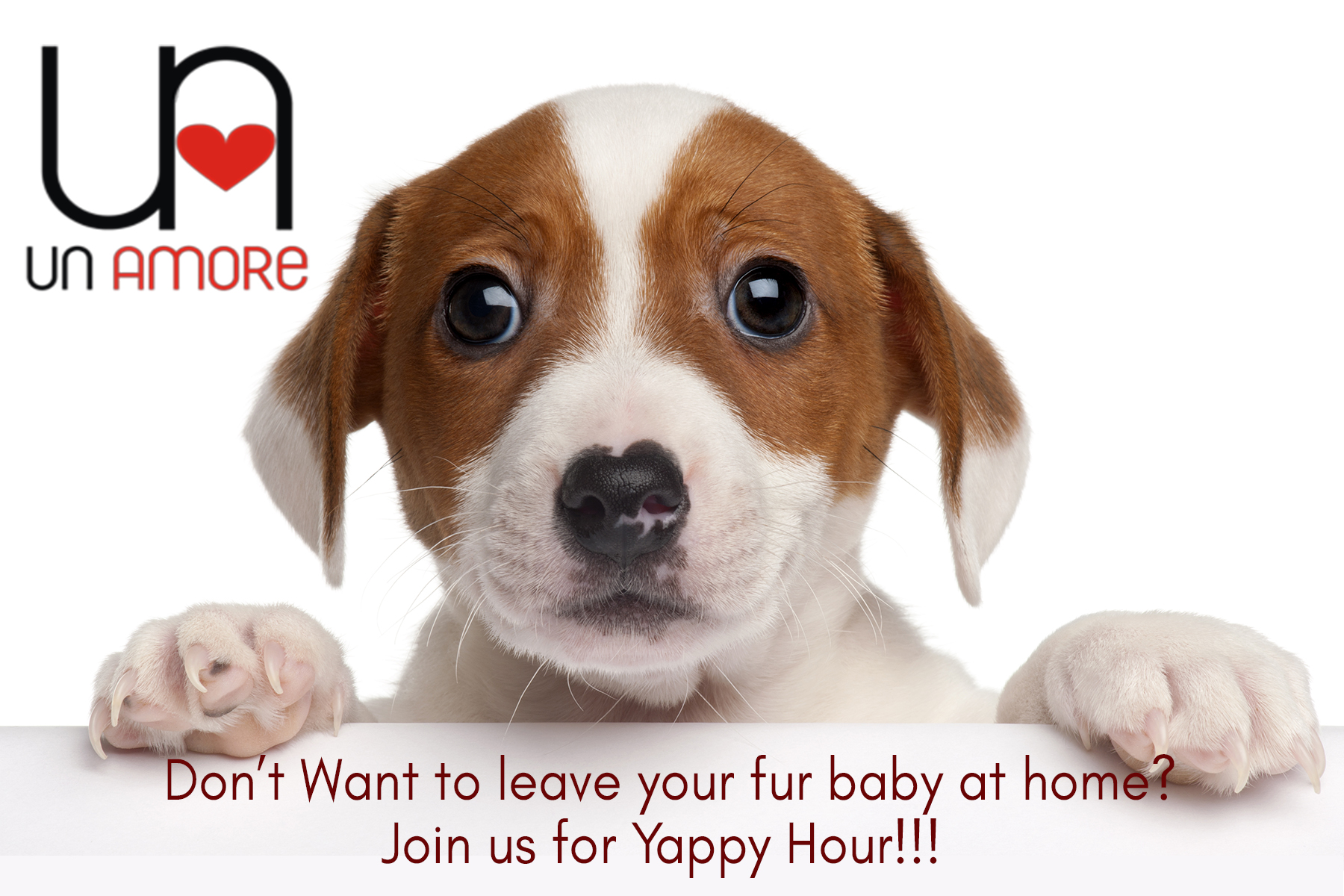 Yappy hour.jpg