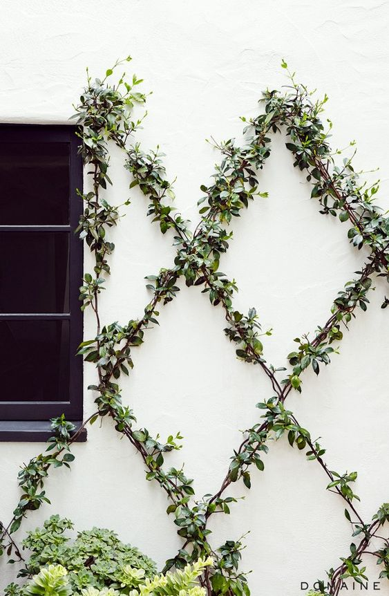 Garden                          - We love the interest that these beautiful vines will add to your outdoor space. This is the perfect thing to add to your home to create a space you and your guest will never want to leave!