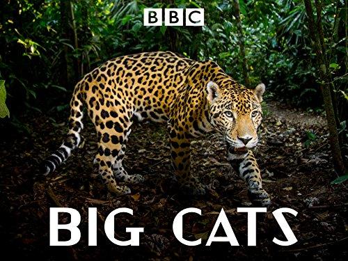 Big Cats - BBC NHU
