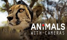 Animals With Cameras - BBC