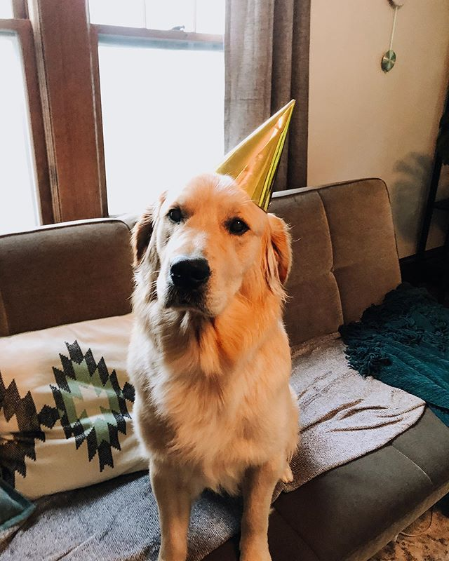 This big floof is one today! His parents are off in France getting married so I get to spoil him. Bear isn't happy about the hat but he'll be really like the birthday hotdog he's getting with dinner!