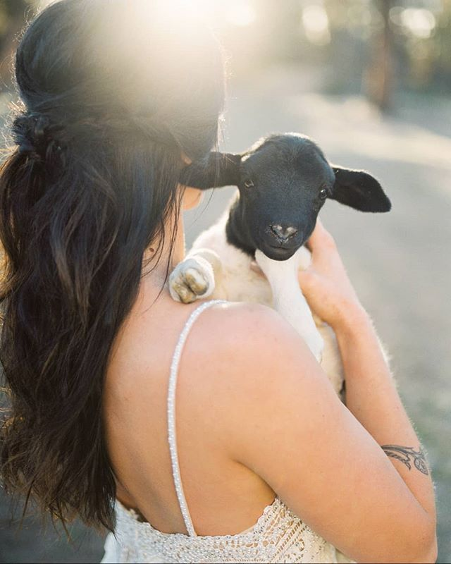 The snow is melting, days are getting longer, and it finally feels like spring may start showing up around here. Kicking it back to when spring lambs arrived and when @nikirhodesphoto couldn't survive without taking photos of the little babies!! Peanut stole the show in these shots 🐑🐏🐑🐏 . . . . . . . #weddinglamb#springwedding#springflorals#centraloregonwedding#lambwedding#bendwedding#animalsatweddings#brightwedding#lightweddingphotography#oregonwedding#oregonweddingplanner#oregonbride#oregonbridemagazine#ligbtandairy#marthaweddings#ohsosweet#bendweddingplanner