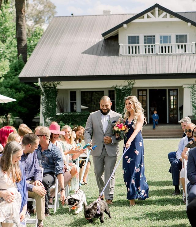 It was national puppy day over the weekend -- we think it should be national puppy day EVERY SINGLE DAY. I mean, it already is, isn't it? . Photography: @christymccarterphoto Venue: @fieldandpond Florals: @gorgeousandgreen . . . . . . #nationalpuppyday #dogsatweddings #weddingdogs #dogringbearer #puppywedding #californiawedding #norcalwedding #weddingflorals #brightweddingflorals #brightweddingflowers #springwedding #weddingdog #weddingceremony #oregonweddingplanner #californiaweddingplanner #destinationweddingplanner #allthepuppies