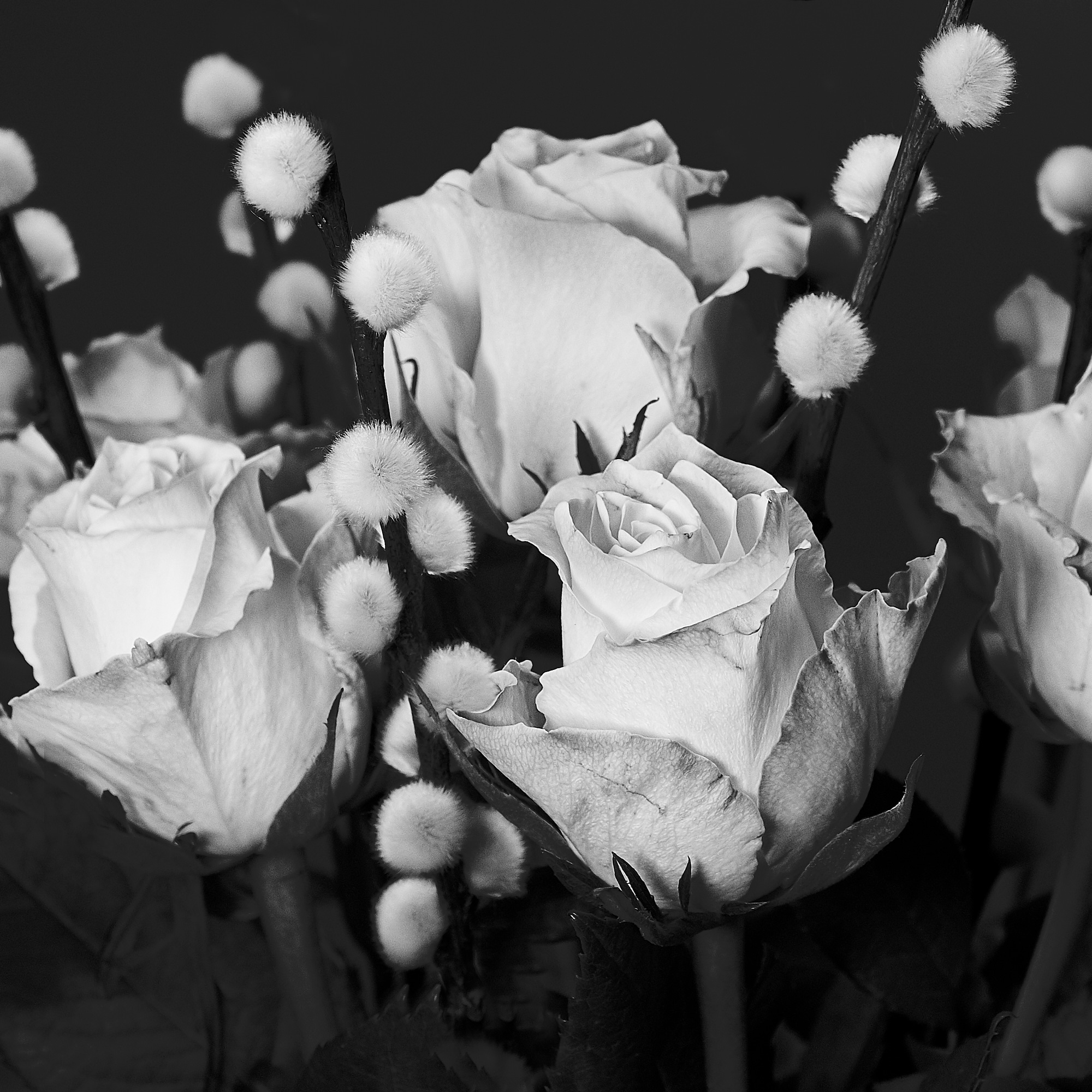 DSCF0709_Monday_Roses_WEB-roses.jpg