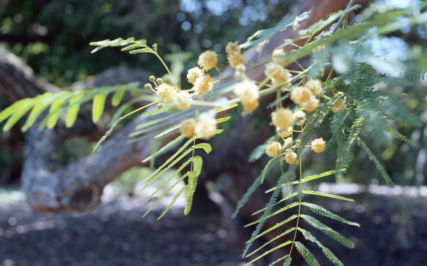 Botanical Gardens006.jpg