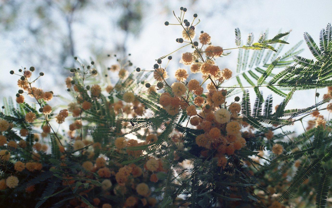 Botanical Gardens007.jpg
