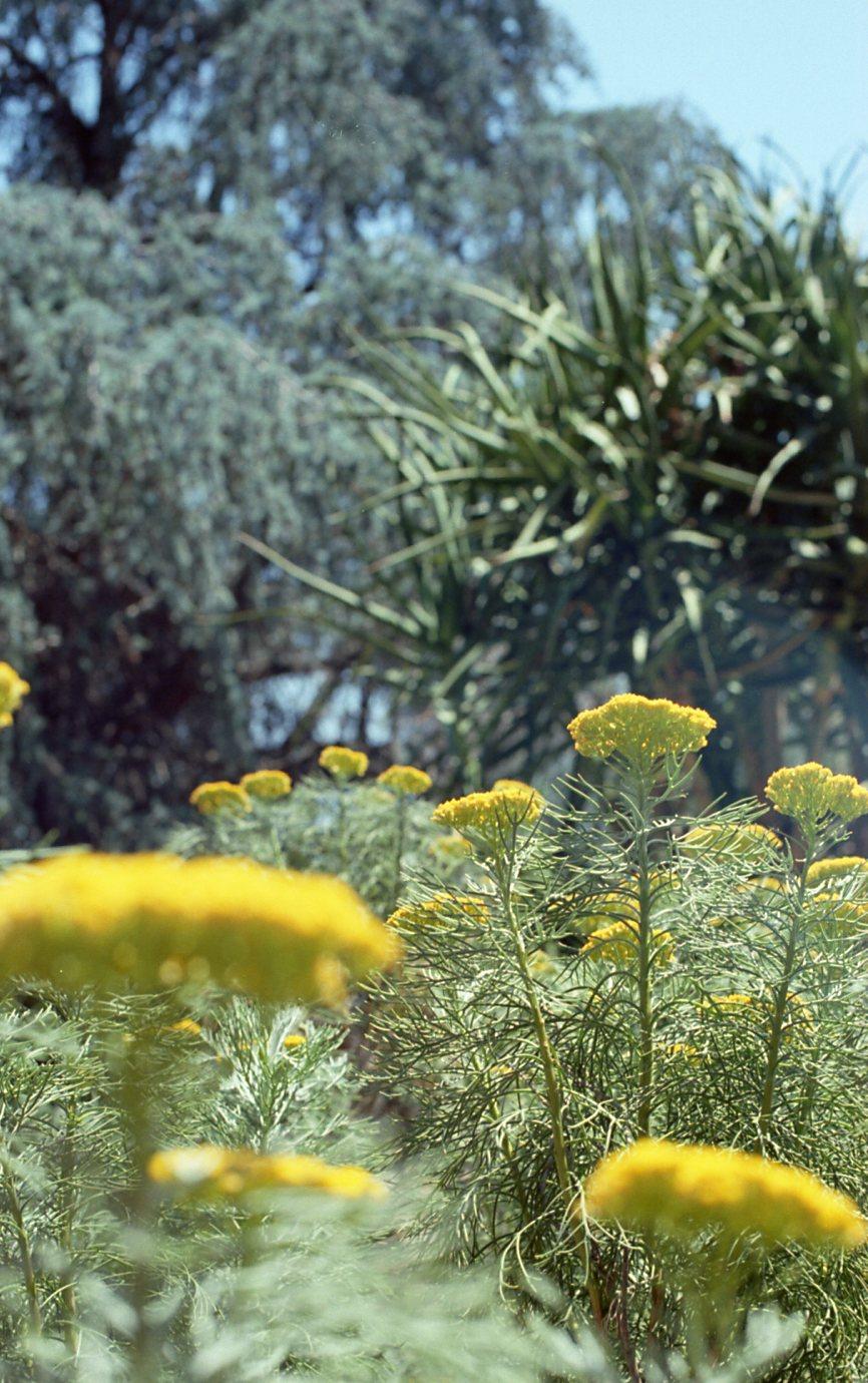 Botanical Gardens010.jpg