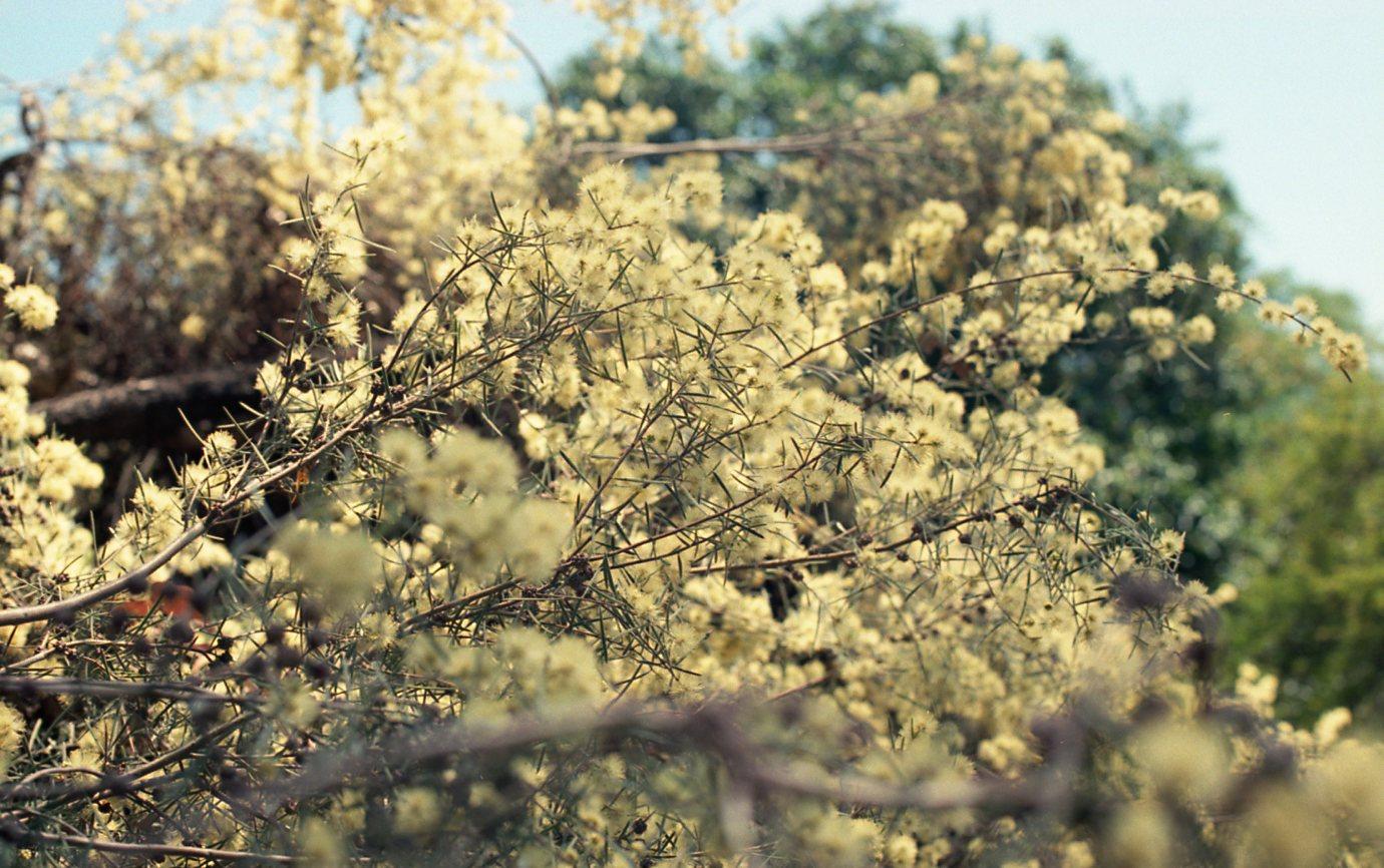 Botanical Gardens011.jpg