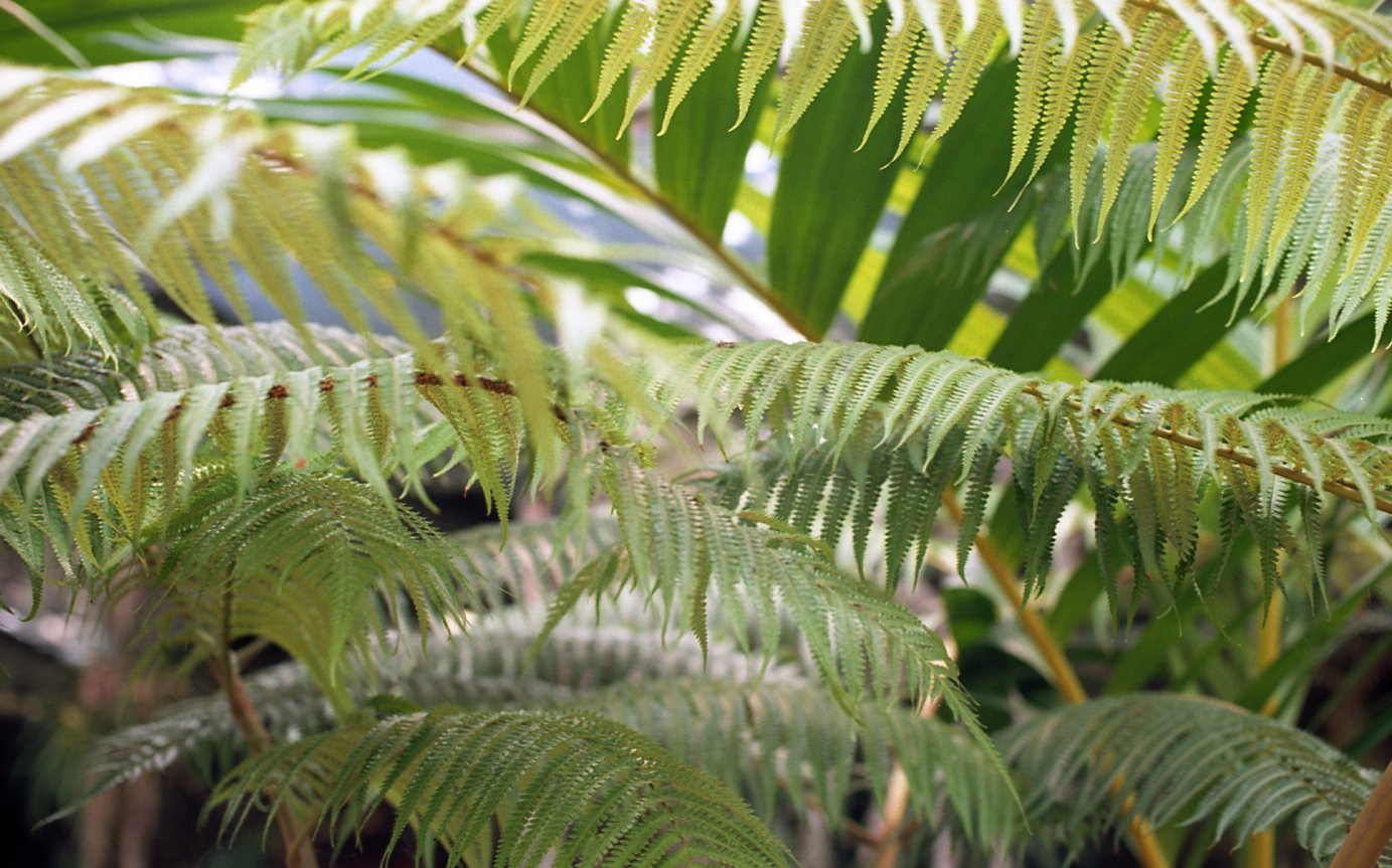 Botanical Gardens032.jpg
