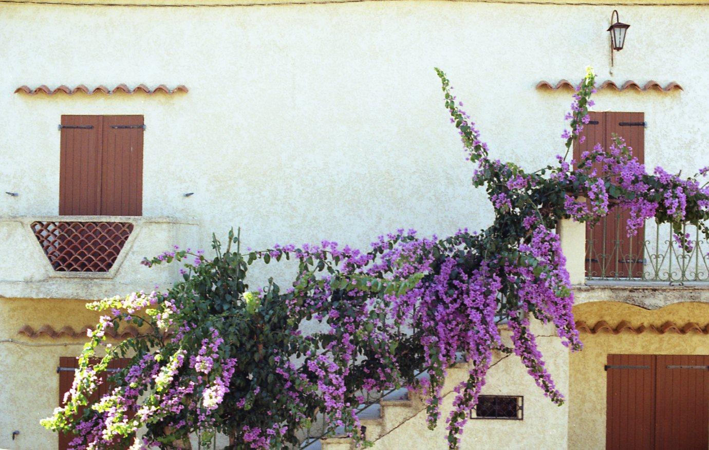 Kodak Gold 200 Sari011.jpg