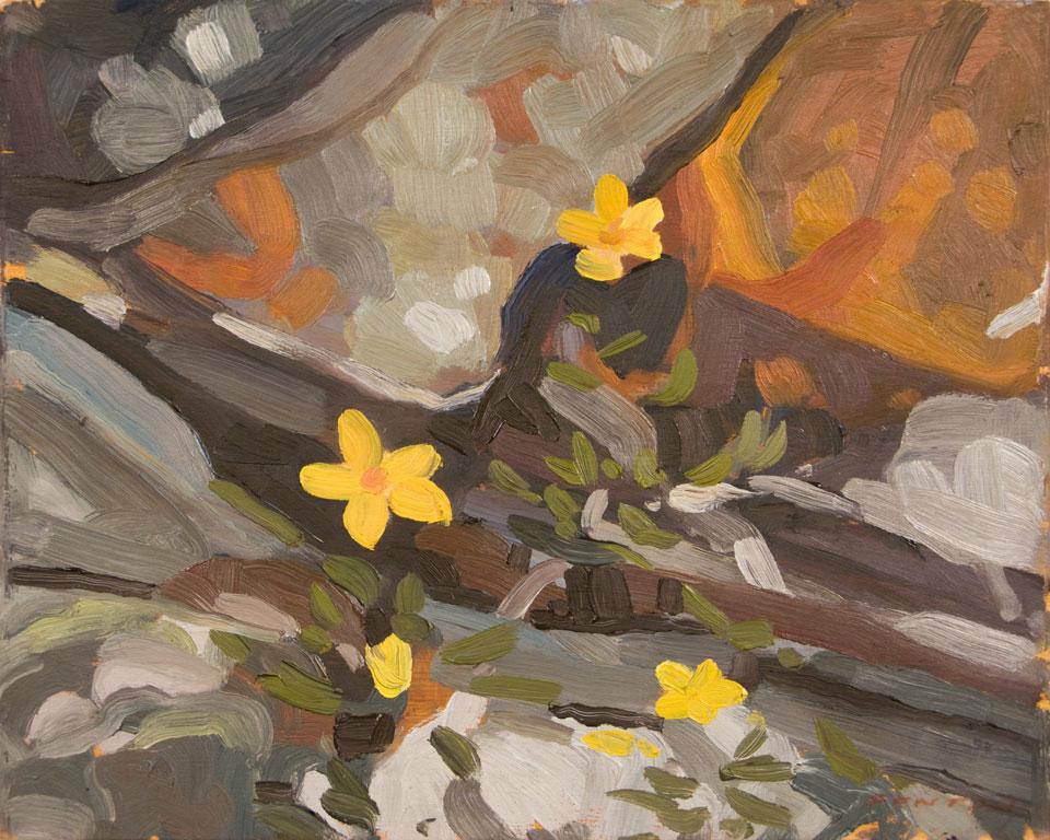 fenton-wildflowers-lakeohara-2010.jpg