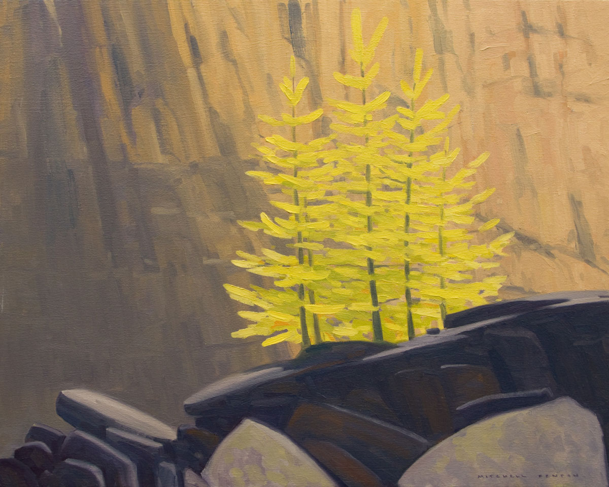 Larches on the East Opabin - 32x38 inch