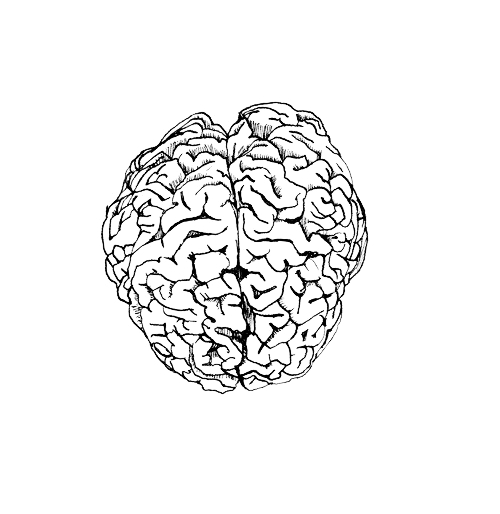 Brain Functional Nutrition