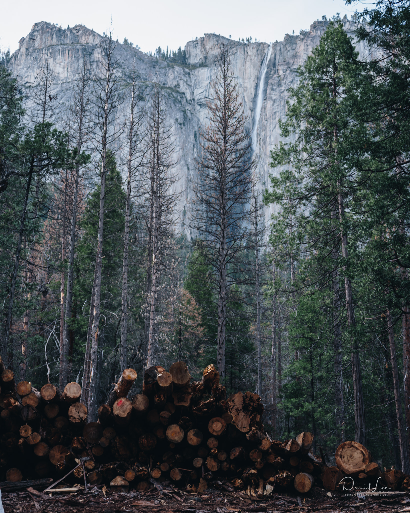 Controlled fires are a part of regular upkeep for Yosemite National Park. Here are some downed trees stacked by Big Oak Flat Road. Photo by Daniel Lee.
