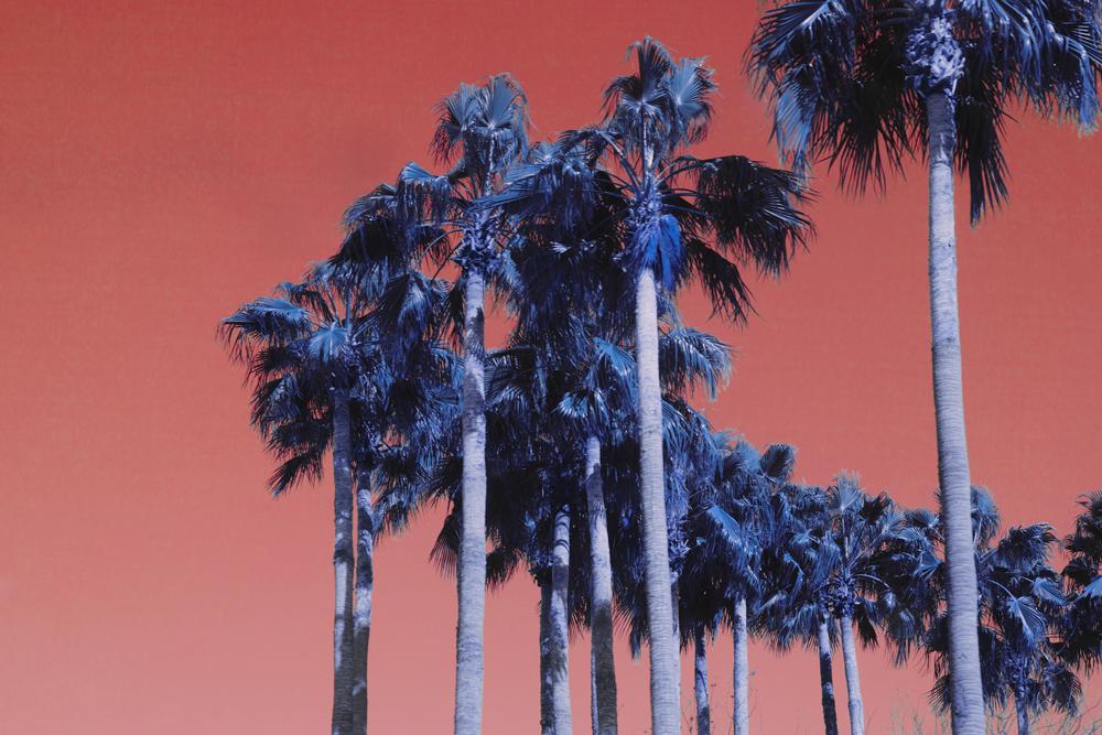 Tropic (2015)