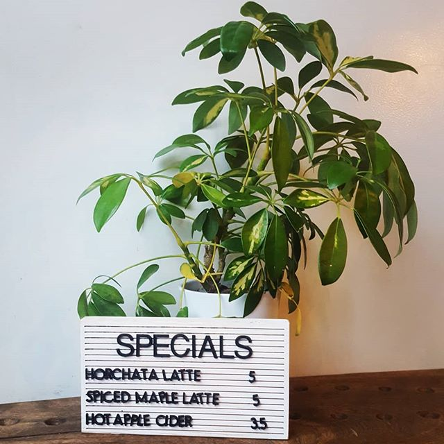 Come try one of our super cozy specials on this rainy Friday.  #drinkspecials #horchatalatte #spicedmaplelatte #hotapplecider #rainyday #tgif