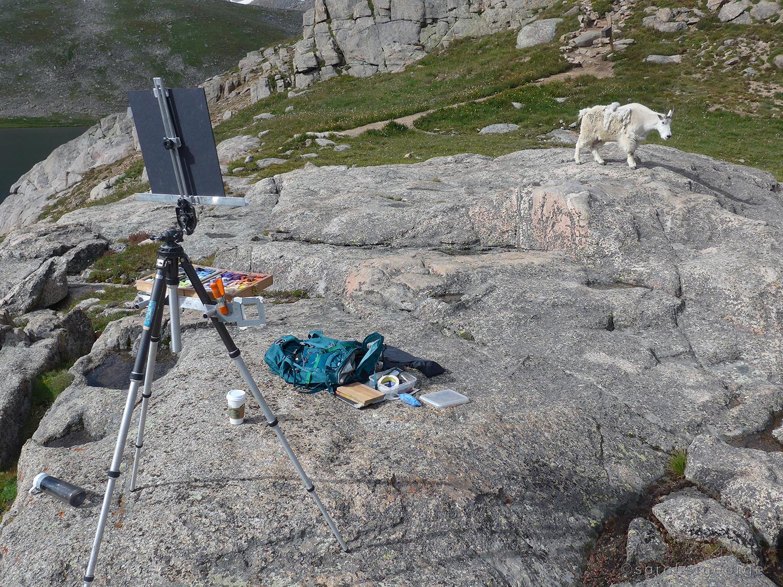 Mountain goat on Mount Evans, CO at 14000 feet