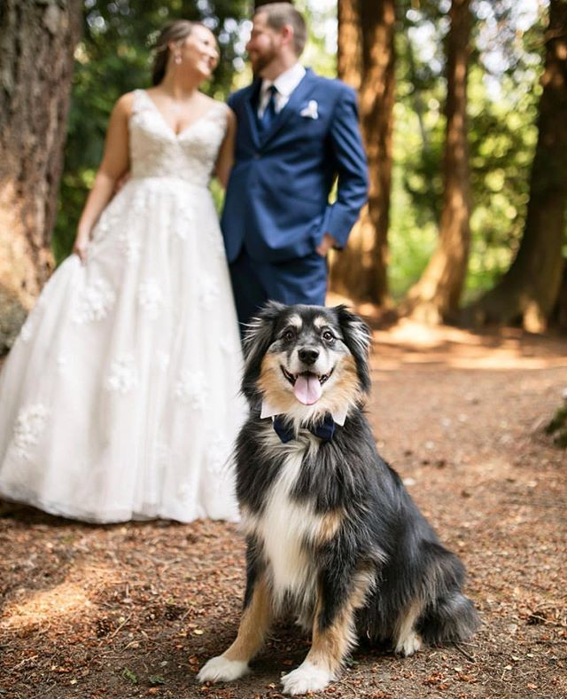 Have we told you how much we love when couples incorporate their fur babies into their weddings? Look how happy and proud Dexter is that his mom and Dad are tying the knot! Priceless. 💗 Photo :: @yourfriendtographer  Venue :: @delillecellars  Beauty :: @mstimssmakeupartist . . . . . #wedwithweddingwise2018 #weddingwise #weddingdog #dogsatweddings #delillecellarswedding #woodinvillewedding #weddingsinwoodinville #seattleweddingplanner #seattlebride #seattleweddings #pnwbride #seattleweddingcoordinator #seattleengagement #seattlebridemag #ohwowyes #theknot #thedailywedding #socalityseattle #designisinthedetails #realwedding #soloverly #pnwwedding #washingtonwedding #washingtonbride #northwestwedding #risingtidesociety #makeitblissful #thelittlethings #refinegroup #dogsofinstagram