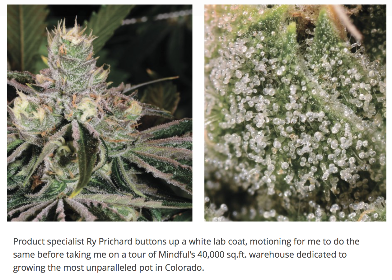 """""""From Seed to Sale: Mindful Marijuana"""" - Outfront, Nov. '14"""