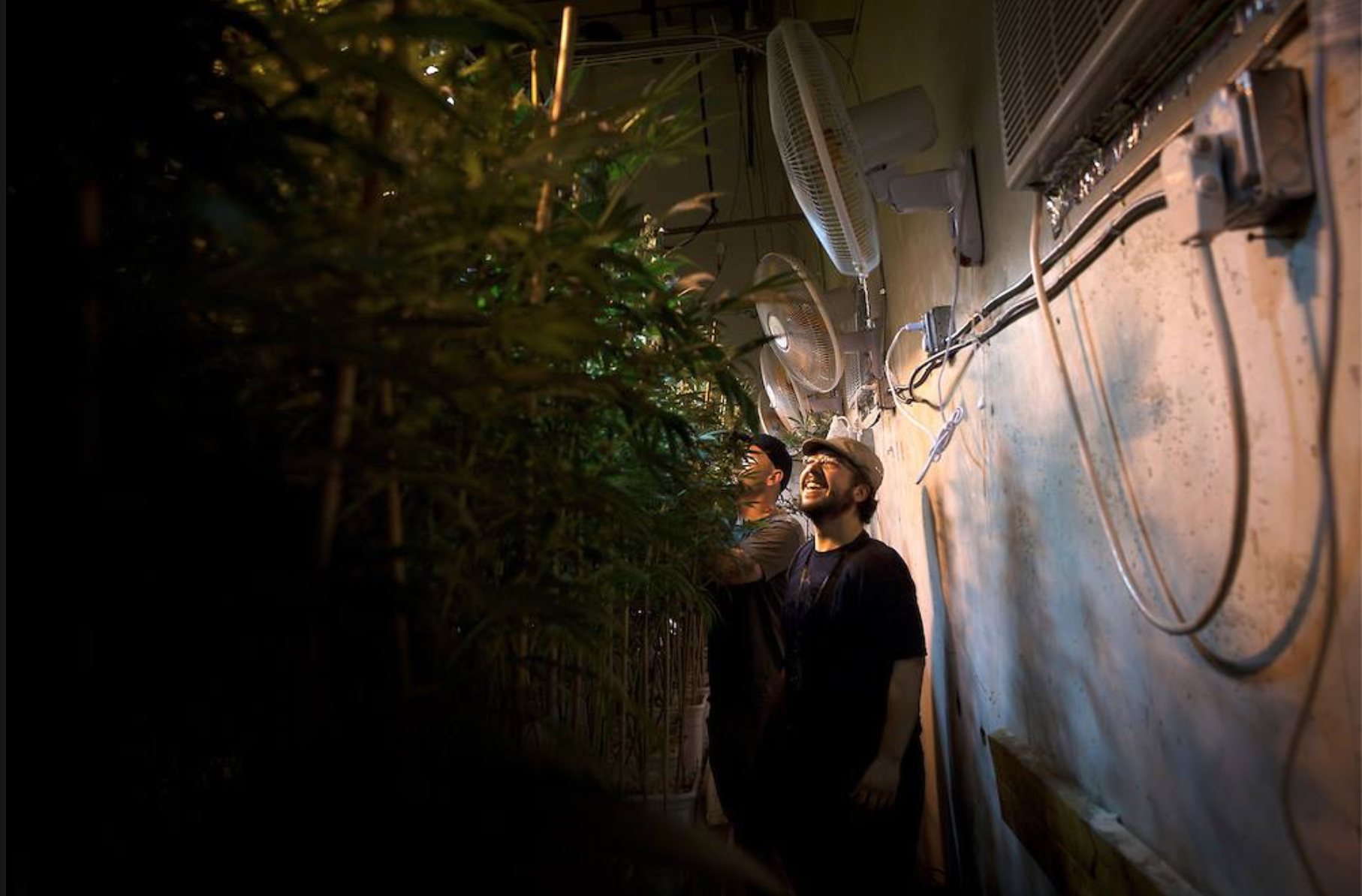 """""""Too High to Fail: Inside Denver's Weed Boom"""" - Rolling Stone, June '13"""