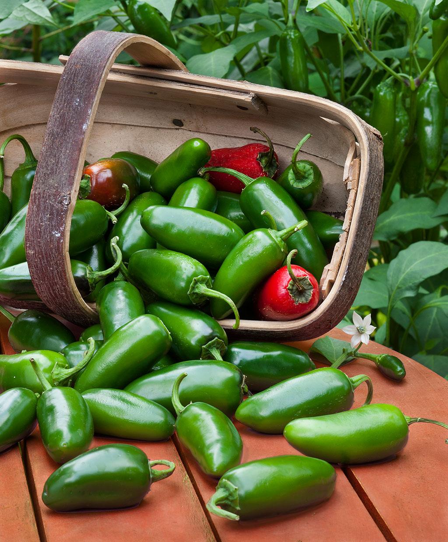 jalapeno-hot-pepper.jpg