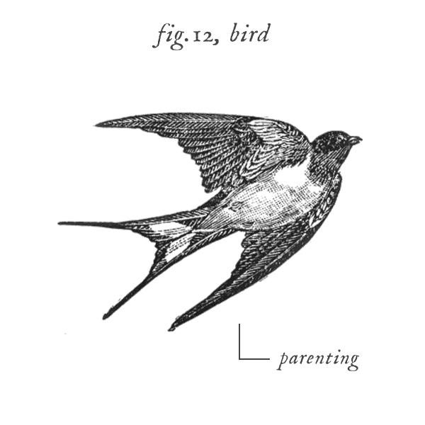 symbols_bird.jpg