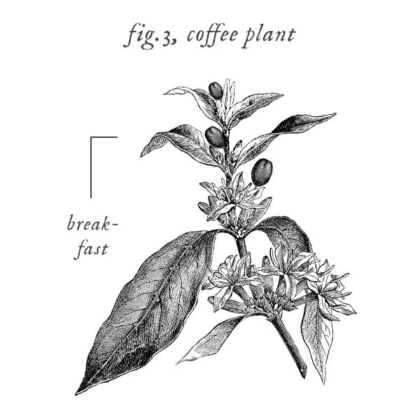 symbols_coffee.jpg