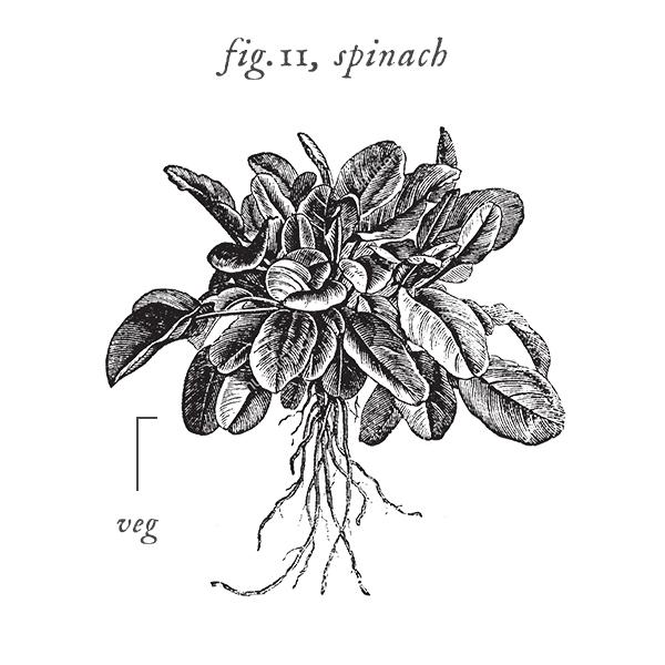 symbols_herbs.jpg