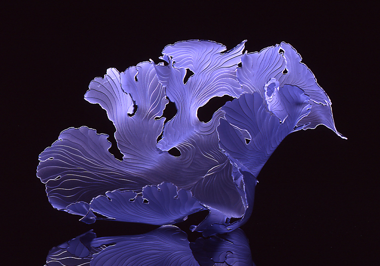 Light violet seafan.jpg
